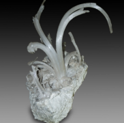 005 Gypsum flower – Natural History Museum Genova- Coralloid Group 22×13 cm
